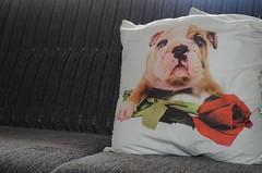 (taysaholocheski) Tags: dog baby flower cute pad bulldog pillow almofada