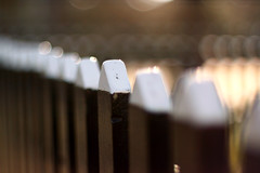 Ein Takumar Zaun zum HFF (Jrgenshaus) Tags: vintage spring bokeh urlaub ameland makro frhling niederlande hff vertikal ballum offenblende blende14 altelinse asashisupertakumar50mm114