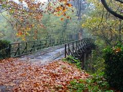 Ponte no Choupal (rgrant_97) Tags: autumn portugal rain chuva outuno jardimbotnico domingo coimbra choupal