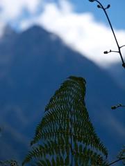 Machu Picchu 42 (2012)