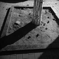 Біля сьомої (Alexander Oleynik) Tags: дерево тень чб форма гештальт