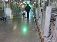 Last Walk, Unwanted Shelter Dog being walked to the room to be Killed