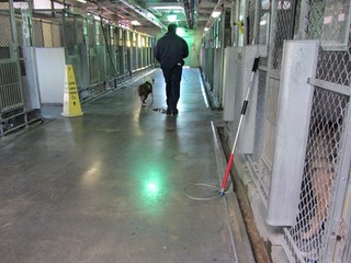 Last Walk, Unwanted Shelter Dog being walked t...