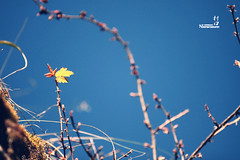 IMG_7469E (Nickphotosalon) Tags: trip flower canon photography no banff boundary 70200 f28 markii vitality