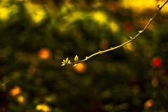 The Lonesome (TJ.Photography) Tags: plant green nature leaves botanical leaf solitude alone branch different natural bokeh grow line twig hanging lonely growing shallow solitary hang depth lining separate lonesome differently separately