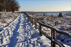 Snowy moorland (Foto Martien (thanks for over 2.000.000 views)) Tags: beekhuizenseweg winter snow sneeuw route way course path road weg pathway passage pad baam straat heath heathland moorland moor heide hei heidevelden posbank herikhuizerveld natuurreservaat natuurmonument nationaalparkveluwezoom naturereserve nationalparkveluwezoom natuurmonumenten zuidelijkveluwe rheden desteeg velp arnhem stuwwal geotagging geotaggedwithgps geotag carlzeisssony1680 sonyalpha77 a77 slta77v martienuiterweerd martienarnhem fotomartien mygearandme mygearandmepremium mygearandmebronze mygearandmesilver photographyforrecreation mygearandmegold mygearandmeplatinum photographyforrecreationclassic photographyforrecreationeliteclub