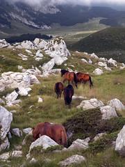 Radiša Živković - Independence (Radisa Zivkovic) Tags: light wild horses mountains nature landscape landscapes nikon europe wildlife highland pastures wilderness montenegro crnagora durmitor zabljak