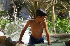 Secret pool in desert oasis (CharlesFred) Tags: green water pool swimming aqua desert oasis oman falaj natuarlpool