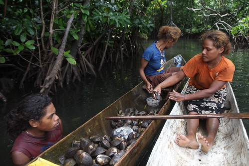 Women removing the shell from mangrove mudshells in Malaita, Solomon Islands. Photo by Wade Fairley, 2012.