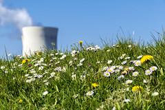 ATOMIC DAISY (Blende1.8) Tags: urban nature natur pflanzen blten blumen grn green kernkraftwerk doel belgien belgium nuke nuclearpowerplant frhling spring nuclear nuklear gnseblmchen daisy daisies energie energy khlturm coolingtower carstenheyer nikon d5500 18140mm nikkor