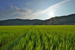 Solar blessing (tyodai) Tags: japan shiga   summer   yogo     7 ilce7 super wideheliar 15mm f45 aspherical iii