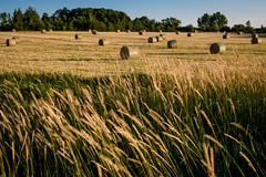 the first cut is the deepest (Port View) Tags: fujixe2 portwilliams novascotia canada cans2s 2016 summer hay field bales round grass wind motion blue sky evening cut
