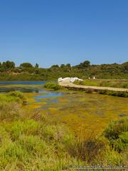 Parc Natural 3 (Lanky8804) Tags: esgrau parcnatural salbuferadesgrau menorca mahn islasbaleares spain es