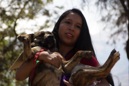 desfile y adopción de mascotas