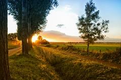 Glow. (Sebas332) Tags: rood oranje biesbosch netherlands nikond90 awardtree