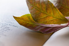Autumn, When last we met... (Captured Heart) Tags: autumn leaves autumncolor book poetry pages