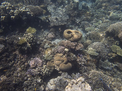 DJIBOUTI (32 of 88) (GregoireDubois) Tags: djibouti nature sea diving wildlife corals