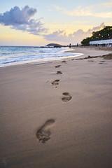 Sand (ericvilendrerphoto) Tags: stthomas virginislands ocean palm trees sand footprints water vacation honeymoon wedding trip travel sony sonyzeiss35mm14za sonya7ii alpha prime lens