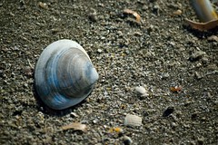 DSC_0203 (damarconet) Tags: sand strand römö north sea beach macro nikon nordsee danmark dänemark lakolk