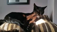 Leeloo. (julzz2) Tags: blackcatsfaces sunnycats cats pussycats mycats cutecats catsfaces catsjune8th sleepingcats blackcats felinefaces felines petsfaces pets animalfaces animals