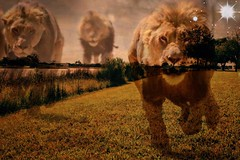 Earths children (eddx004x) Tags: abstract freedom free roam nature lions surreal