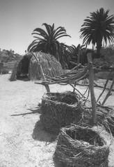 Exa 1C Ballona Wetlands () Tags: vintage retro classic losangeles la california history 35mm film camera exa exakta dresden veb pentacon eastgermany ddr gdr