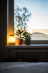 Lazy 2 (junestarrr) Tags: home window interior decor apartment fall autumn plant windowsill light oulu finland