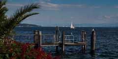 Bodensee sailing paradise (M3irsens) Tags: 2016 bodensee flickr jona journalistenakademie juli kas konradadenauerstiftung lebensqualität jonamsee überlingen