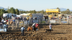 "Our first rodeo • <a style=""font-size:0.8em;"" href=""http://www.flickr.com/photos/87636534@N08/8156872066/"" target=""_blank"">View on Flickr</a>"