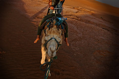 "Morocco day 3<br /><span style=""font-size:0.8em;""><a href=""http://www.bagpacktraveller.com"" rel=""nofollow"">Our Travel site</a><br /><br /><a href=""http://www.facebook.com/Bagpack.Traveller"" rel=""nofollow"">Facebook</a></span> • <a style=""font-size:0.8em;"" href=""http://www.flickr.com/photos/58790610@N06/8162475421/"" target=""_blank"">View on Flickr</a>"