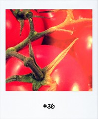 "#DailyPolaroid of 3-11-12 #36 • <a style=""font-size:0.8em;"" href=""http://www.flickr.com/photos/47939785@N05/8164884653/"" target=""_blank"">View on Flickr</a>"