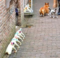 """My Future ? "" (Alexander Den Ouden) Tags: dog jack russell zeeland veere"