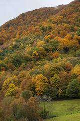 Autumn texture (I) (elosoenpersona) Tags: autumn trees espaa del forest spain colours arboles asturias colores bosque otoo hermo fuentes cordillera cangas narcea cantabrica hayedo gedrez xedr elosoenpersona