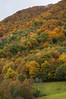 Autumn texture (I) (elosoenpersona) Tags: autumn trees españa del forest spain colours arboles asturias colores bosque otoño hermo fuentes cordillera cangas narcea cantabrica hayedo gedrez xedré elosoenpersona