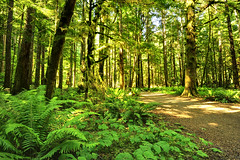 Finding the Mysterious (Northern Straits Photo) Tags: trees light shadow summer sun green forest washington path warmth wa olympicnationalpark ireenaworthy northernstraitsphotography