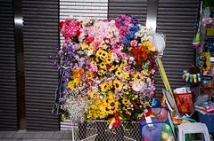 Thanks a bunch (JoelOlex) Tags: flowers film japan toys tokyo fuji fake bunch analogue kitch