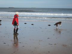 Dog walker on Longsands beach (Lady Wulfrun) Tags: sea dog seaside tide ships horizon sands thesea tynemouth fetch tidal dogwalking cullercoats dogwalker longsands northtyneside