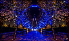 Eye Eye !! (Explored) (LeePellingPhotography.co.uk) Tags: blue trees london eye westminster leaves wheel path south bank millennium british airways avenue lightsled