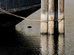 ... and Aft (Drew Makepeace) Tags: lines tugboat ropes piles cntugno6
