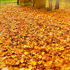 871 (visualimpakkt) Tags: autumn leave automne square herbst quadro otoo blatt bltter autunno quadrato quadrat cuadrado carre quadratique quadrique cuadrtico quadratico