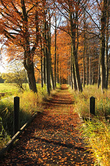 Autumn Walk (Paul Beentjes) Tags: bridge autumn trees sun fall netherlands bomen colours estate herfst nederland brug slot chteau zon marquette kasteel kleuren heemskerk landgoed mygearandme mygearandmepremium mygearandmebronze mygearandmesilver mygearandmegold