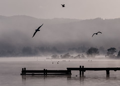 Grey Dawn (Ian@NZFlickr) Tags: morning lake island rotorua time jetty gulls north smell wharf nz sulphur geothermal mists