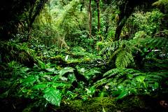 welcome to the jungle (The Cookiemonster) Tags: trees plants green wet rainforest jungle mexiko lahuasteca edwardjames castillodeedwardjames