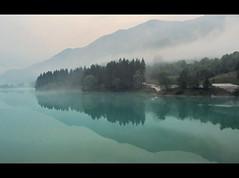 (Giuseppe Suaria) Tags: lake reflection tree fog alberi lago nebbia riflessi riflesso