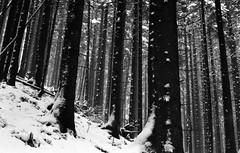 ready for winter? (Gabain) Tags: winter snow film forest 50mm minolta x700 rokkor adox cms20