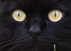 KOCIO (arjuna_zbycho) Tags: pet cats pets cute animal animals cat blackcat austria österreich kitten feline chat kitty kittens tuxedo gato tuxedocat gatto katzen haustier kater niederösterreich tier gattini rakousko hauskatze kocio impressedbeauty