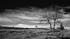 winter tree (Sibilus_Basilea) Tags: autumn winter white black tree monochrome weiss baum schwarz lonesome einzeln einzelner byncnd mygearandme mygearandmepremium
