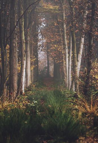Hazy fairytale (Explore #2, 27.11.2012) (Mathijs Delva) autumn trees red brown mist green nature wet grass yellow misty fog forest early weeds woods woodlands foggy fresh lane hazy moist 100mmf28macro