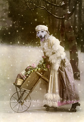 Merry Christmas! (Martine Roch) Tags: christmas new winter portrait dog snow cute art animal digital photoshop labrador year adorable surreal retro gifts boudi martineroch flypapertextures