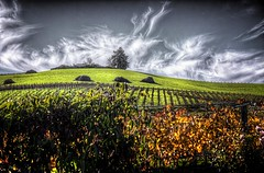 View from Carneros hwy (dred707..busybusybusy) Tags: nov weather clouds landscape vineyard 2012 matchclub adexcellence daarklandsexcellence rockpaperexcellence exhibitionexc